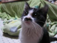 車庫で拾った猫!チャコメインのほのぼのしたBlogはコチラ!